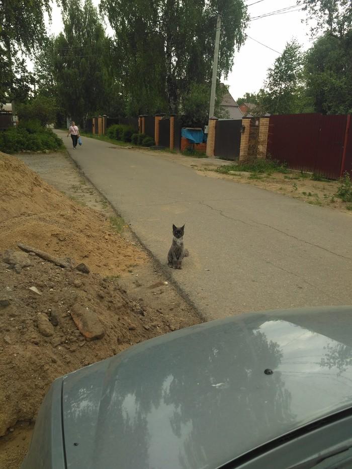 Опасный кот Кот, Стрижка, Длиннопост