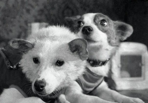 Собаки Белка и Стрелка, СССР, 1960 год.