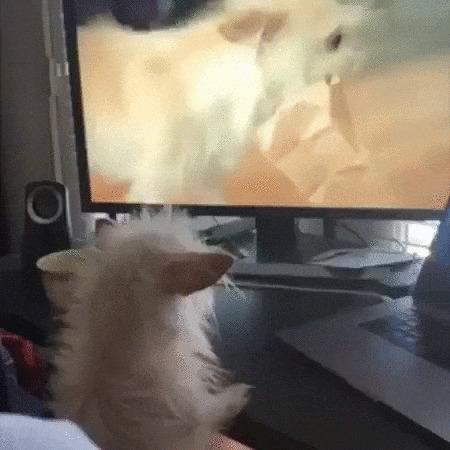 Где ты, моя молодость? Собака, Домашние животные, Экран, Смотрит, Воспоминания, Позитив, Видео, Гифка