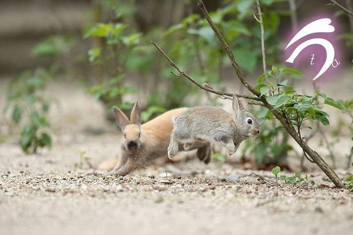 Ты водишь! Кролик, Милота, Игры, Салки, Бег, Фотография, Животные