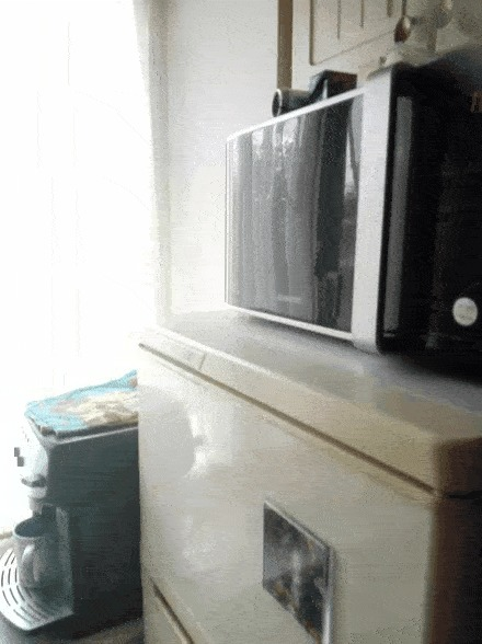 Котики такие котики Кот, Смешное, Гифка
