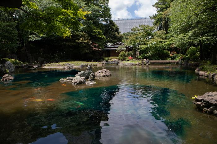 Как подкрашивают воду в пруду Япония, Токио, Пруд, Карп, Вода, Ясукуни