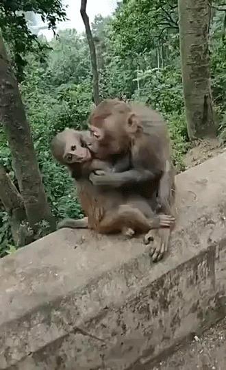 Никакой тактичности у лысых обезьян