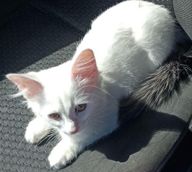 Потерялся котенок Потерялся кот, Бюро находок, Кот