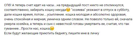 Санкт-Петербург. Хозяин уезжает в отпуск и хочет усыпить свою кошку. Кот, Помощь животным, В добрые руки, Санкт-Петербург, Без рейтинга, Длиннопост