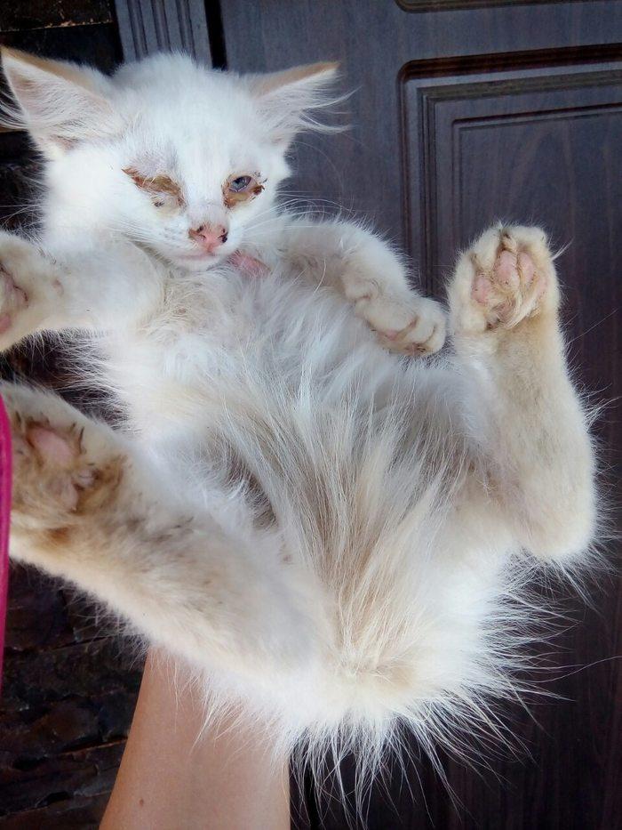 Подобрашка Котята, Добро, Бездомные животные, Длиннопост, Кот