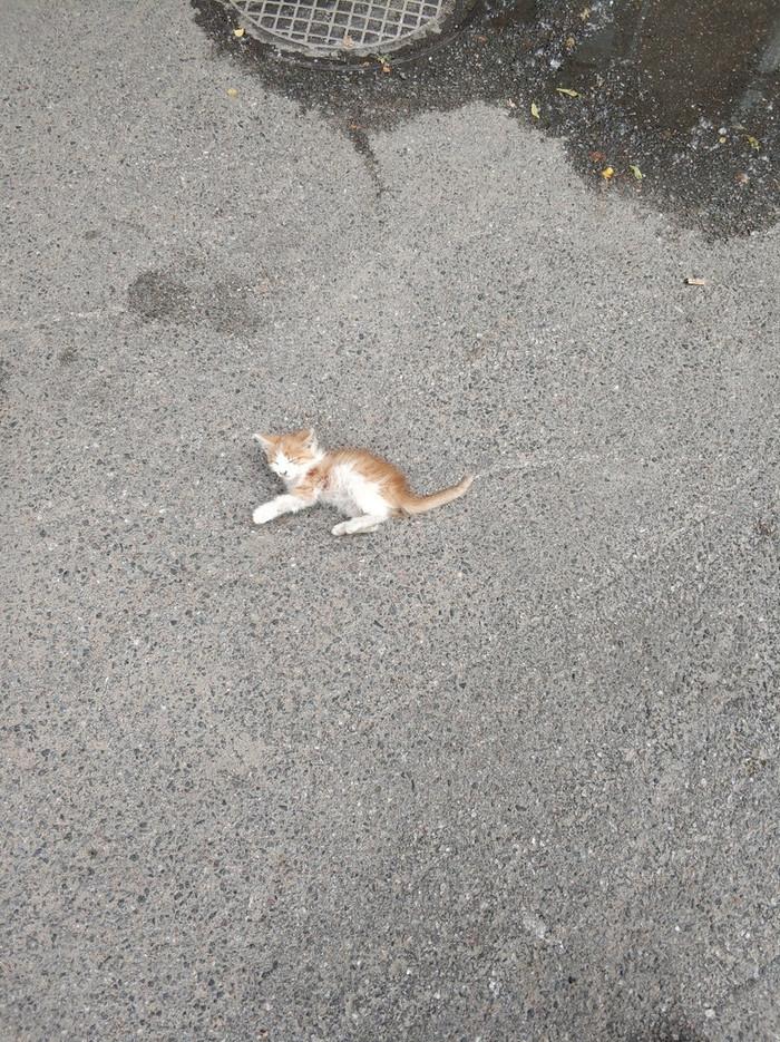 Рыжее солнышко ищет дом. Котенок, спасенный с раскаленного асфальта. Санкт-Петербург. Кот, В добрые руки, Помощь животным, Без рейтинга, Длиннопост