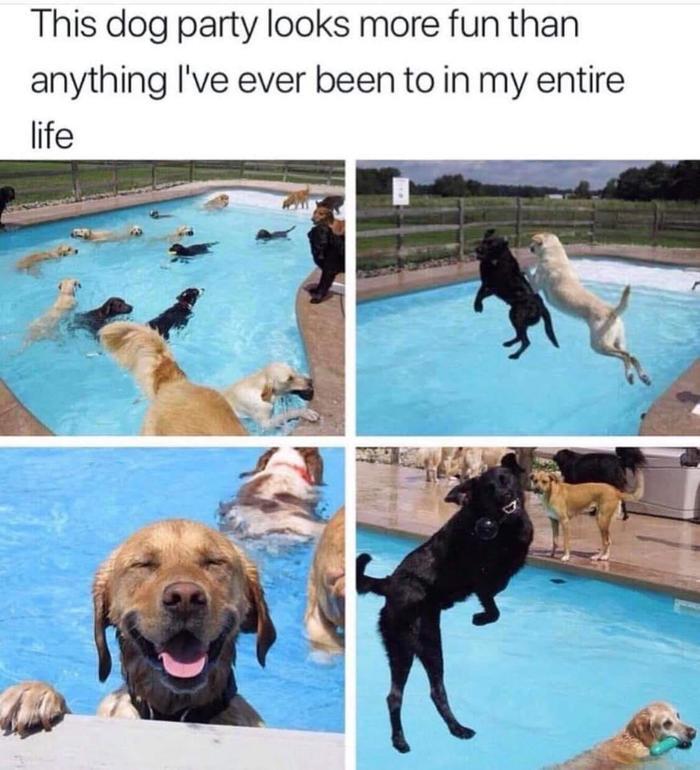Эта собачья вечеринка выглядит веселей, чем всё что было в моей жизни