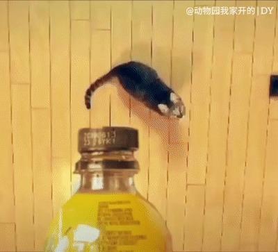 Лучший #bottlecapchallenge из всех, что вы видели