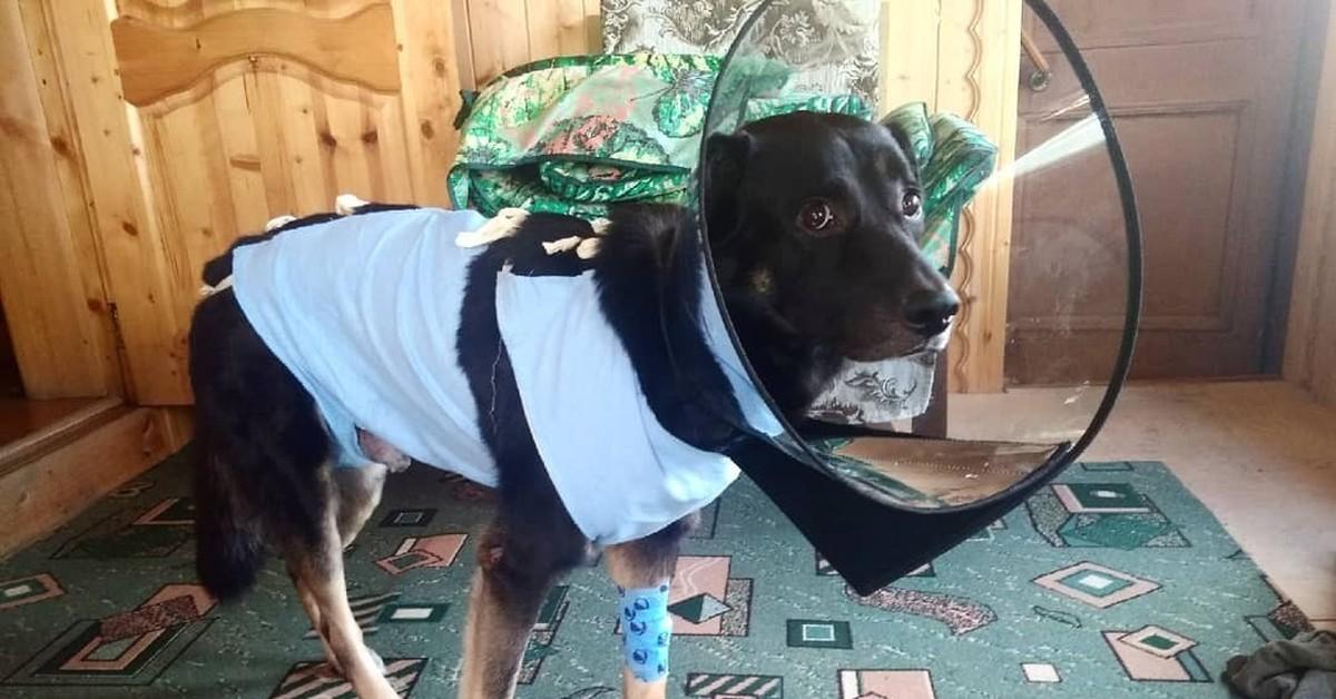 тренажерах пропавшие собаки фото помощью легко объедините