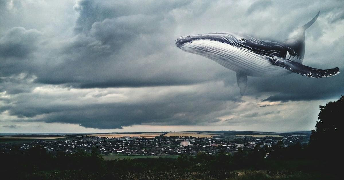 неплохо киты в небе фото лошади живут