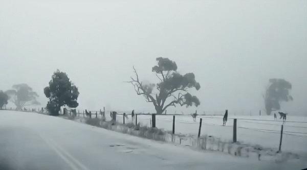 Не каждый день увидишь кенгуру на снегу Кенгуру, Погода, Австралия, Гифка