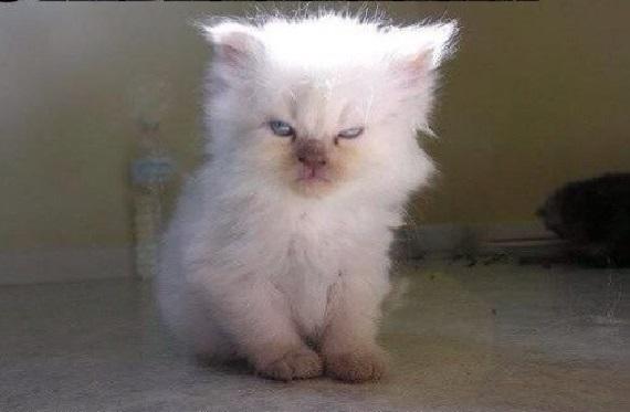 Кисо недоволен