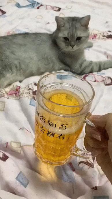 Фокус для кошки Кот, Домашние животные, Кружки, Фокус, Гифка