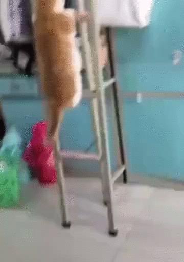 Альпинистка моя, скалолазка моя Кот, Домашние животные, Лестница, Кровать, Гифка
