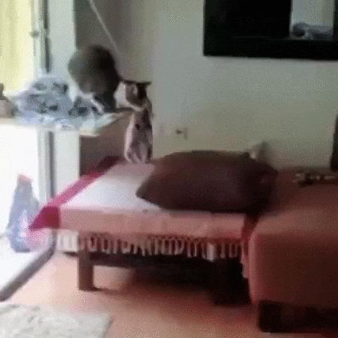 Доступная среда для особенного котика Кот, Домашние животные, Инвалид, Без лап, Животные, Гифка