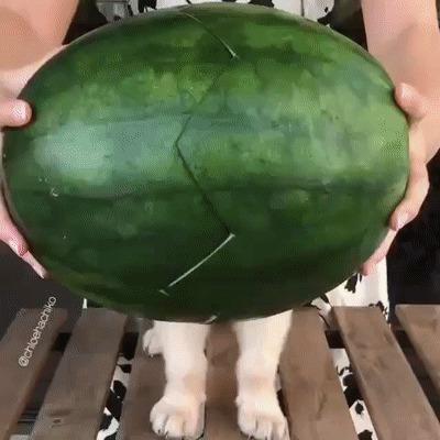 Чудо-арбуз