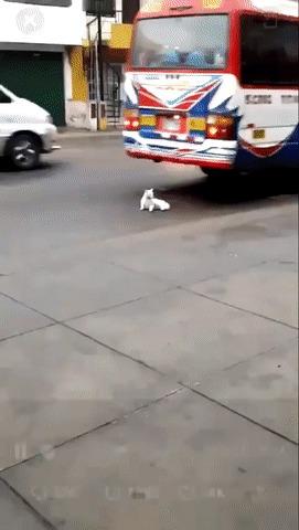 Кот-суицидник