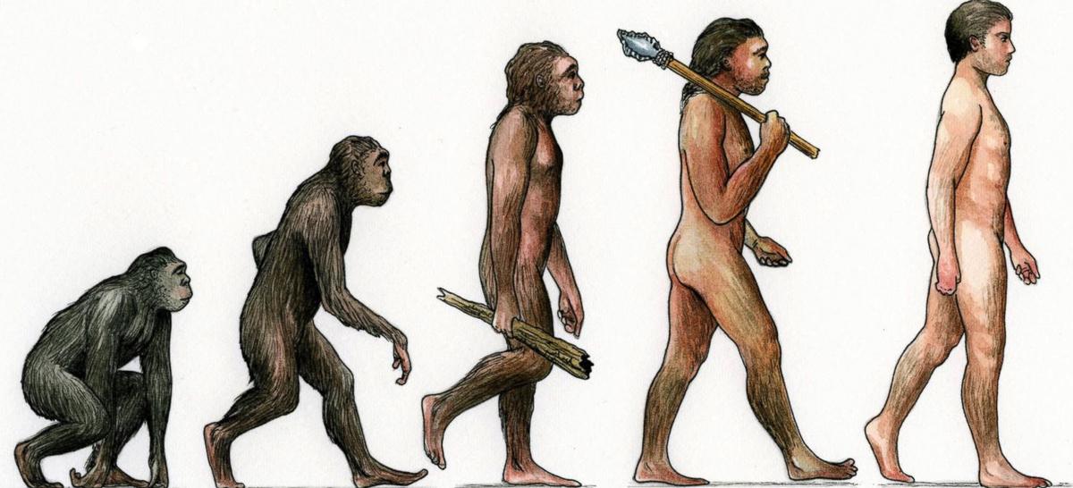 картинки этапов эволюции человека даст больше