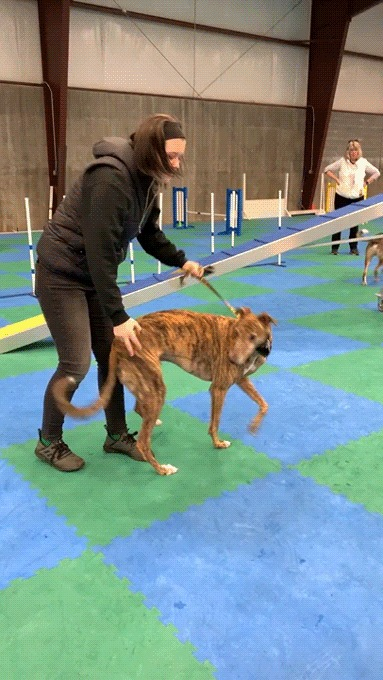 Слепой пёс играет с мячом