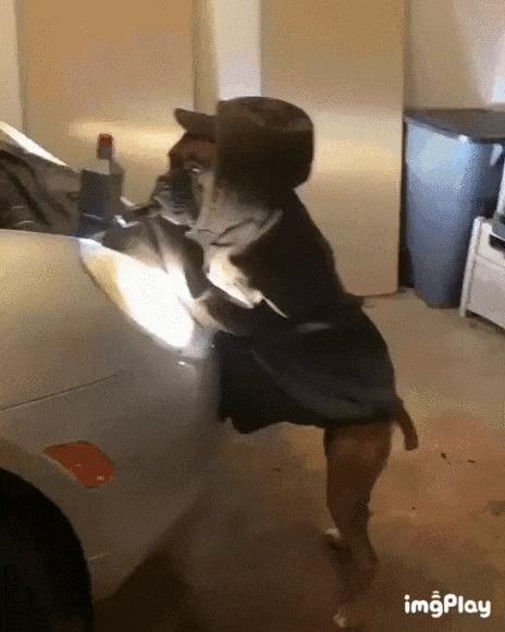 Я все проверил, хозяин Собака, Боксёр, Домашние животные, Авто, Машина, Фонарик, Гифка