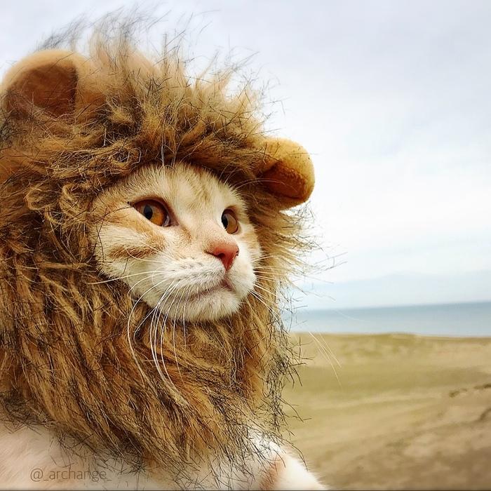 количество фото кота в шапке льва они