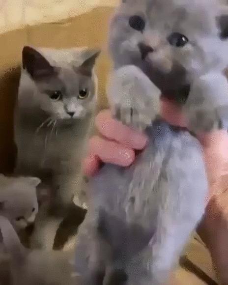 Не трогай, это моё! Кот, Котята, Котомафия, Домашние животные, Мама, Защита, Забота, Гифка