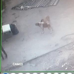 Самооборона против бродячих собак