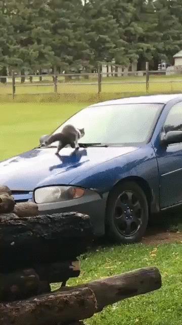 Вот это развлечение! Кот, Котомафия, Животные, Машина, Авто, Горка, Развлечения, Гифка