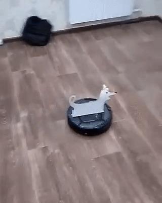 Родителям подарили робот-пылесос. Они назвали его Тузиком, ну а дальше папу уже было не остановить. Робот-Пылесос, Конура, Twitter, Гифка