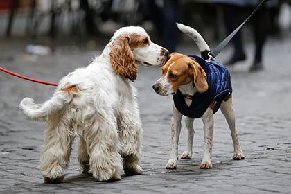 В Италии представили законопроект о защите прав собак | Пикабу