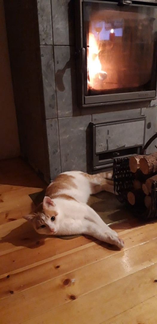 До и после. Рыжий кот, предположительно сбитый машиной. Кот, Помощь, Длиннопост
