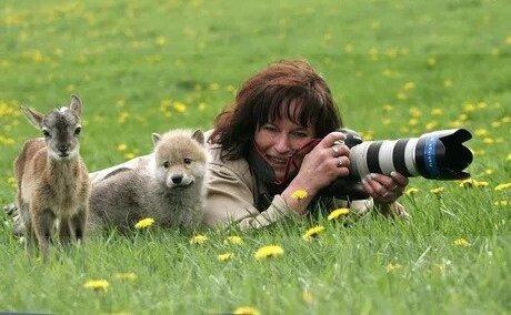 Любопытные оленёнок и волчонок