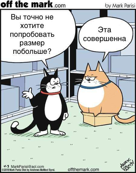 Тем временем, в котомагазине