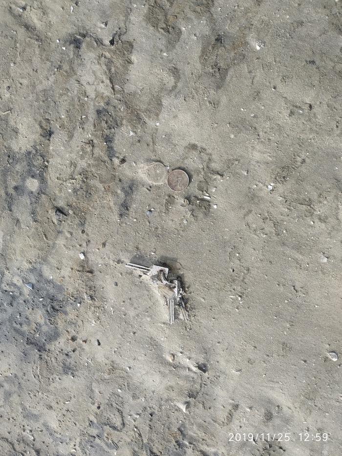 Артефакты прошлых эпох со дна Таганрогского залива Таганрогский залив, Бывает в Таганроге, Длиннопост