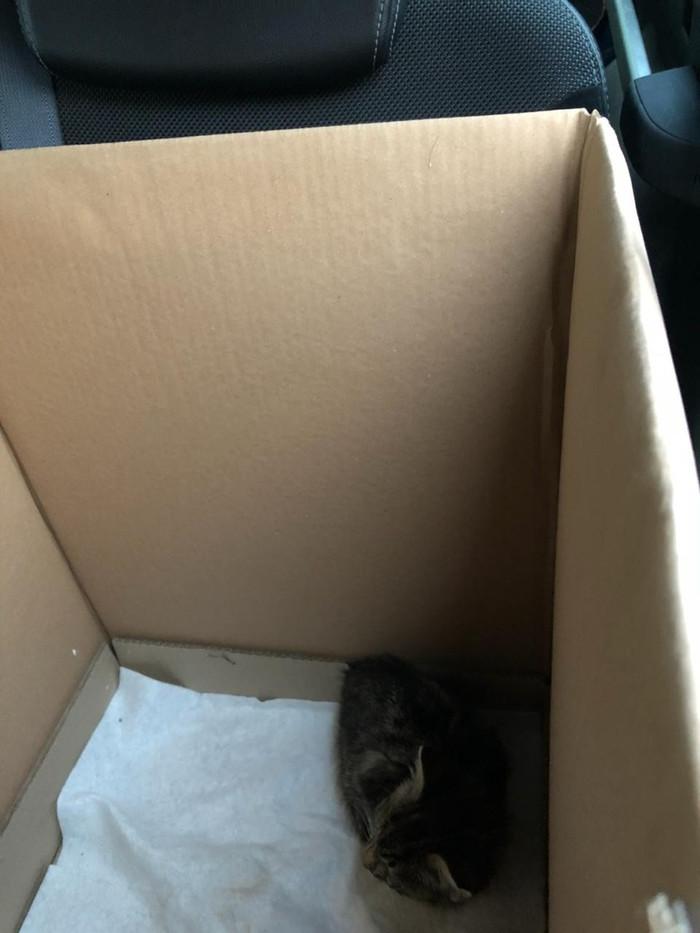 До и после. Котенок со стройки в Лисьем Носу. Кот, Помощь, Видео, Длиннопост