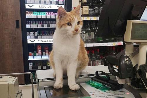Люди бойкотируют магазин, в который запрещено заходить коту Кот, Бойкот, Англия, Права животных, Курьез, Длиннопост