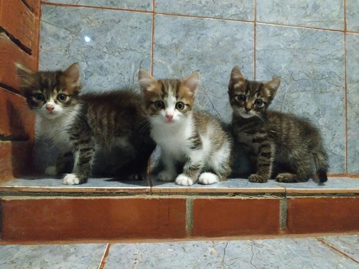 Котята ищут дом. Краснодар, Котята, В добрые руки