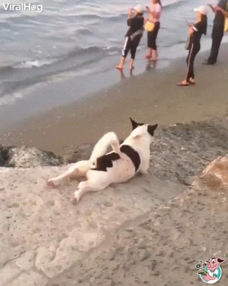 Развлекаюсь, как могу Собака, Животные, Горка, Ползет, Развлечения, Пляж, Гифка