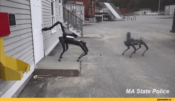 Американская полиция начала применять робособак Boston Dynamics Собака, Робот, Полиция США, Интересное, Технологии, Удивительное, Гифка, Длиннопост