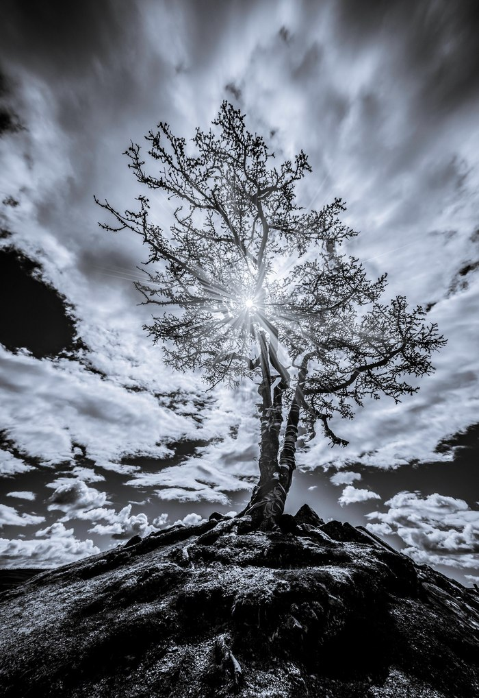 Дерево Черно-белое фото, Черно-белое, Начинающий фотограф, Фотография, Ольхон, Байкал