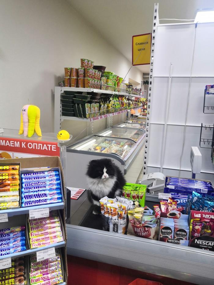 У меня лапки Кот, Магазин