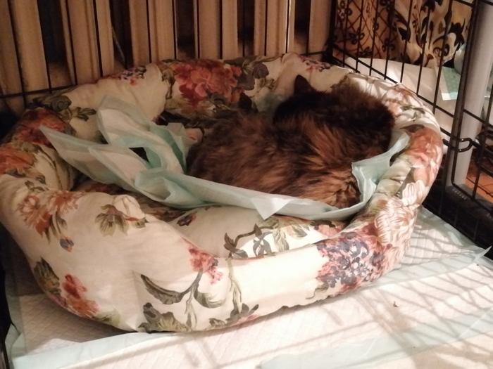 Доклад о здоровье Муси Кот, Лечение кошек