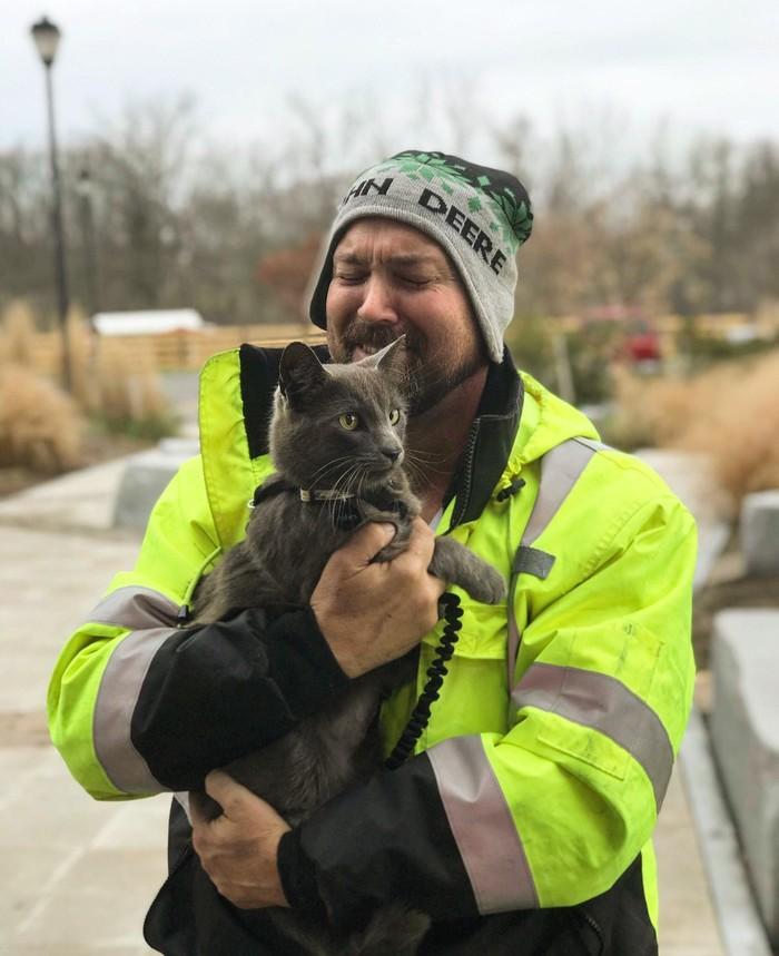 Благодаря микрочипу хозяин нашёл в Нью-Йорке своего кота, который потерялся в Огайо Reddit, Перевод, Случай из жизни