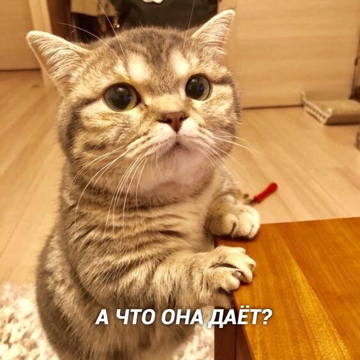 Максимально жизненно Кот, Котомафия, Милота, Длиннопост