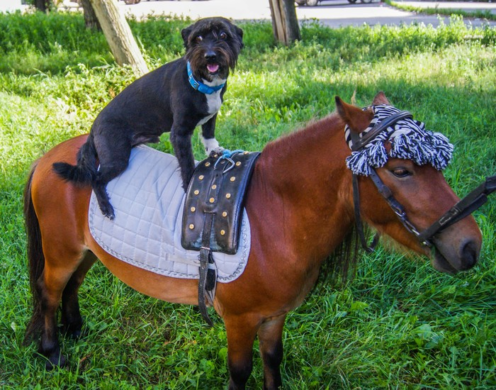 Мои собачки: Малыш, Ника и Кай Собака, Животные, Питомец, Длиннопост