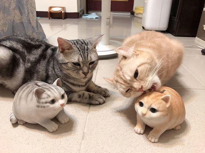 Что-то здесь не так .. Кот, Пара, Копилка Кошка, Кусь, Не понимаю, Длиннопост