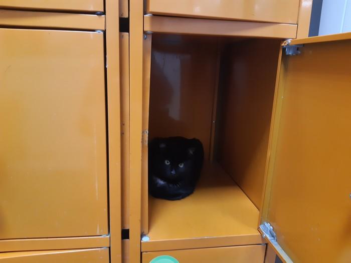 Для чего ставят шкафчики в супермаркетах? Кот, Супермаркет