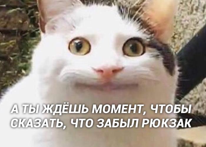 Уровень адреналина зашкаливает Кот, Котомафия, Милота, Длиннопост