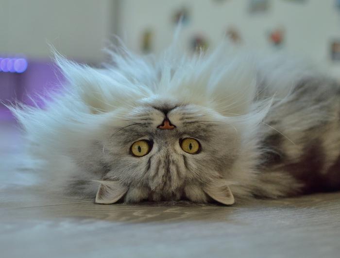Кот наоборот